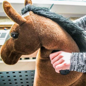 Pferde für Kinder in Mülheim